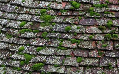 Roof Damage 101: How to Know It's Time for a Repair